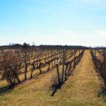 Nearby Vineyards - Roanoke Virginia
